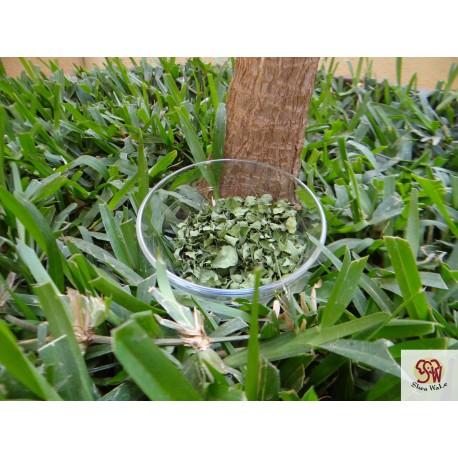 Moringa Oleifera Pulver 100g